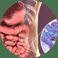 Here's The Difference Between Prebiotics and Probiotics