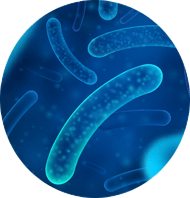 What Are Probiotics and The Benefits?