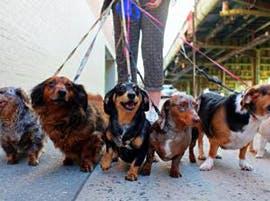 Walking dogs thumbnail