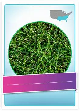 Bermuda Grass allergenic pollen