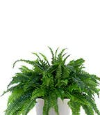 Best_Plants_Worst_1