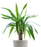 Best_Plants_Worst_3
