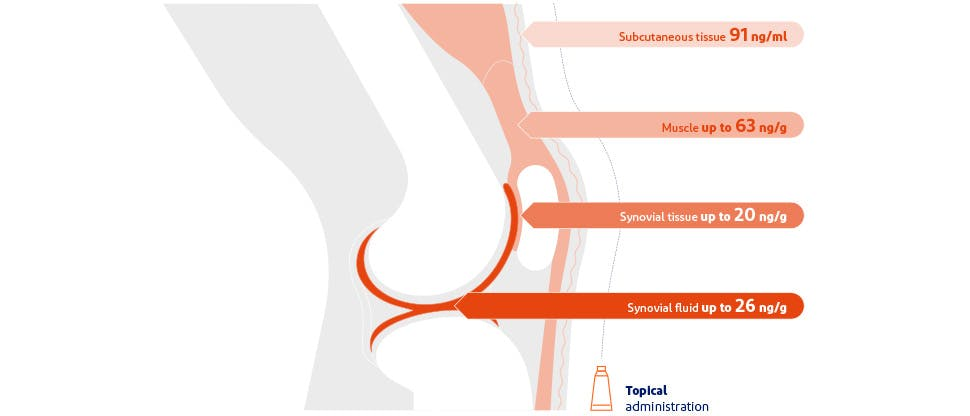 Diagram showing the concentrations of diclofenac reaching the various tissues beneath the skin of the knee following topical application3