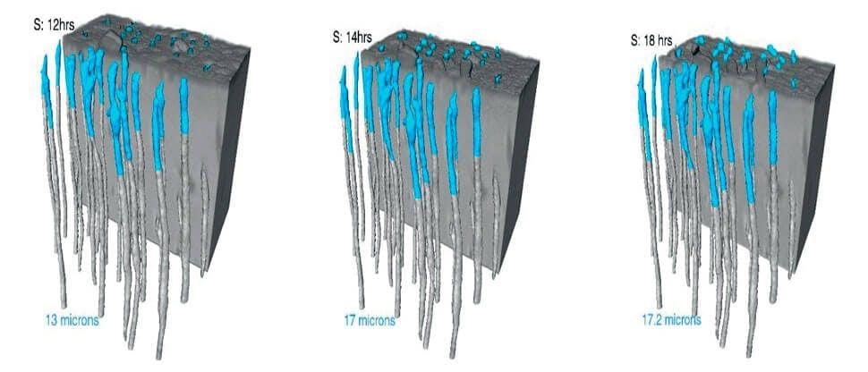 in vitro szinkrotron adatmegjelenítés