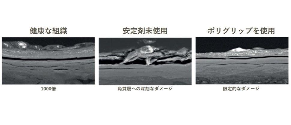 in vitro において、ケシの実とアクリル板とともに12時間攪拌した後の口腔組織