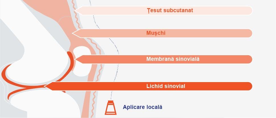 Diagramă care ilustrează concentraţiile de diclofenac care pătrund în diferite ţesuturi de sub pielea de la nivelul genunchiului după aplicarea topică3