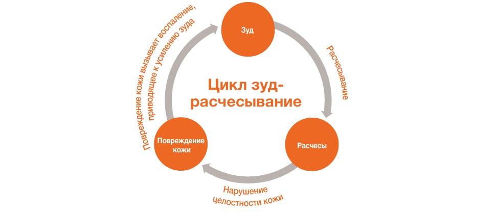 Графическое изображение цикла зуд-чесание