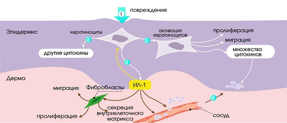 Патогенез экземы