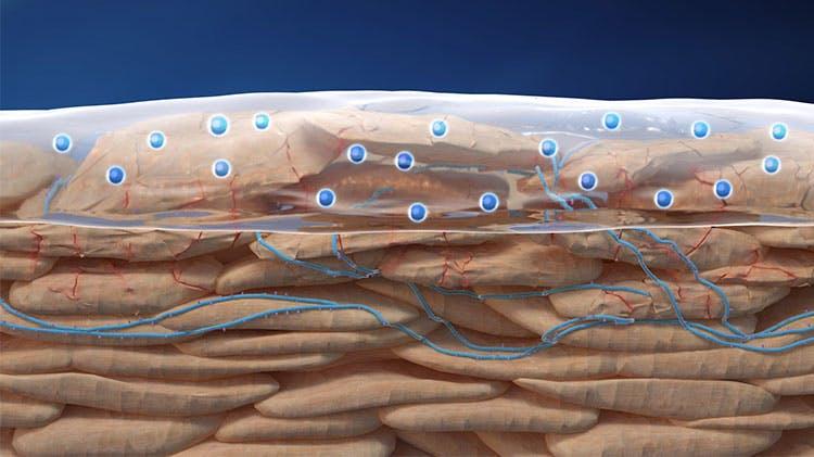 диаграмма, показывающая доставку тербинафина в роговой слой