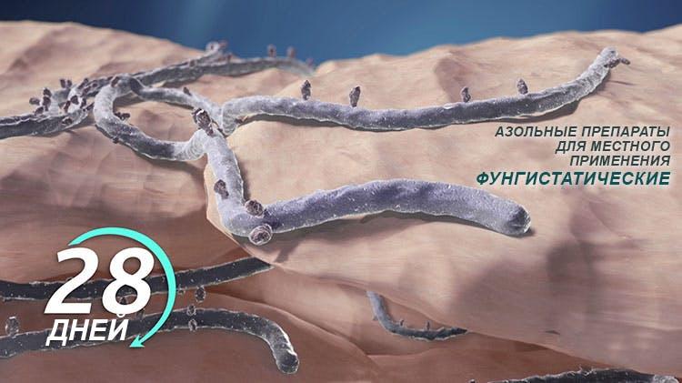 диаграмма, показывающая фунгистатическое действие азолов