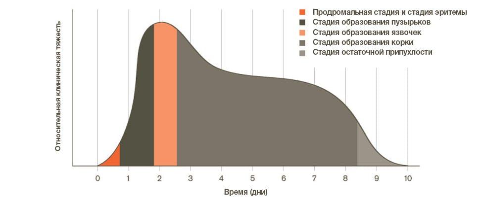 график, показывающий стадии герпеса губ