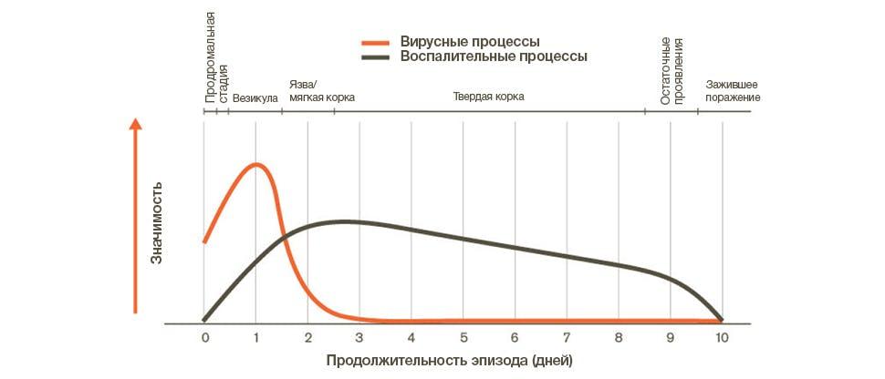 Вирусные и воспалительные процессы во время эпизода герпеса губ