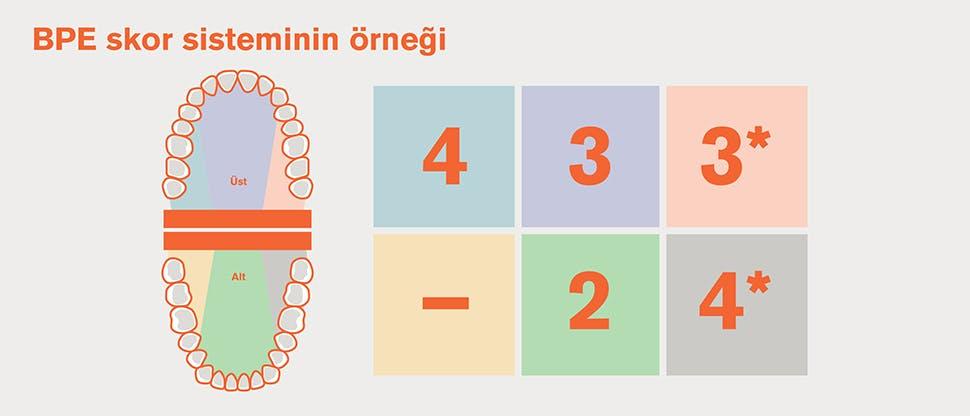 BPE'de dişlerin altı bölgeye ayrılması ve çizelge örneği