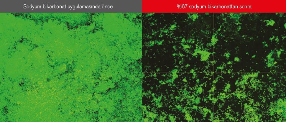 Biyofilmin eş odaklı lazer taramalı mikroskop (CLSM) görüntüleri
