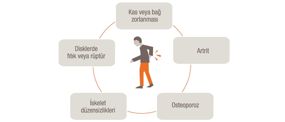 Bel ve sırt ağrılarının potansiyel nedenlerini gösteren grafik