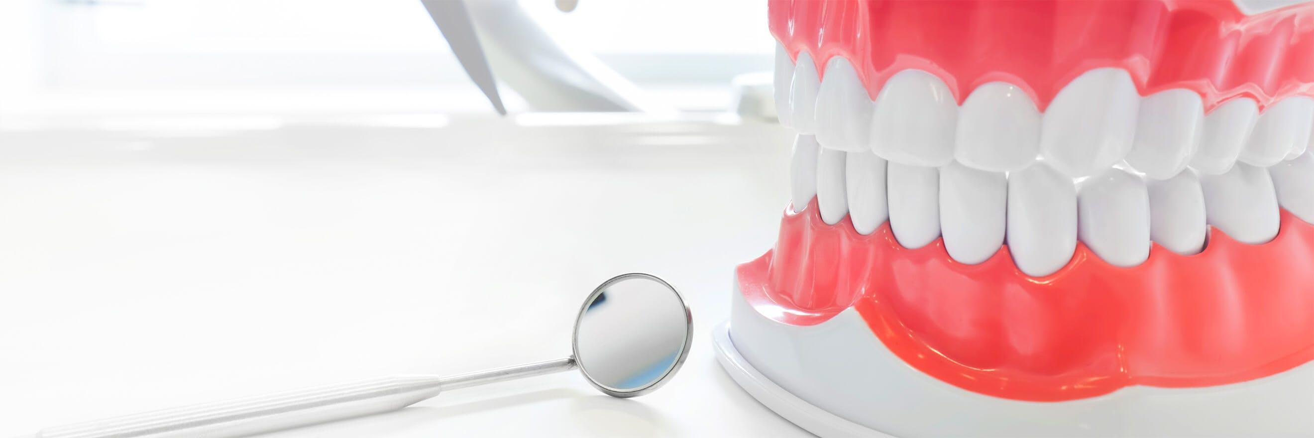 דגם של שיניים עם מראה של רופא שיניים