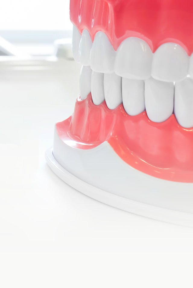 แบบจำลองฟัน โมเดลฟัน