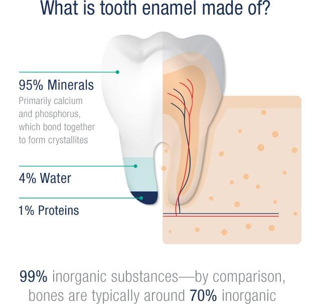 L'émail des dents est composé de 95 % de minéraux, de 4 % d'eau et de 1 % de protéines
