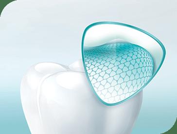 Structure d'une dent. L'émail est la couche extérieure qui protège la dent.